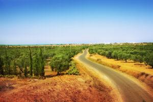 Tunisian Field